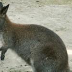 cleland-conservation-park