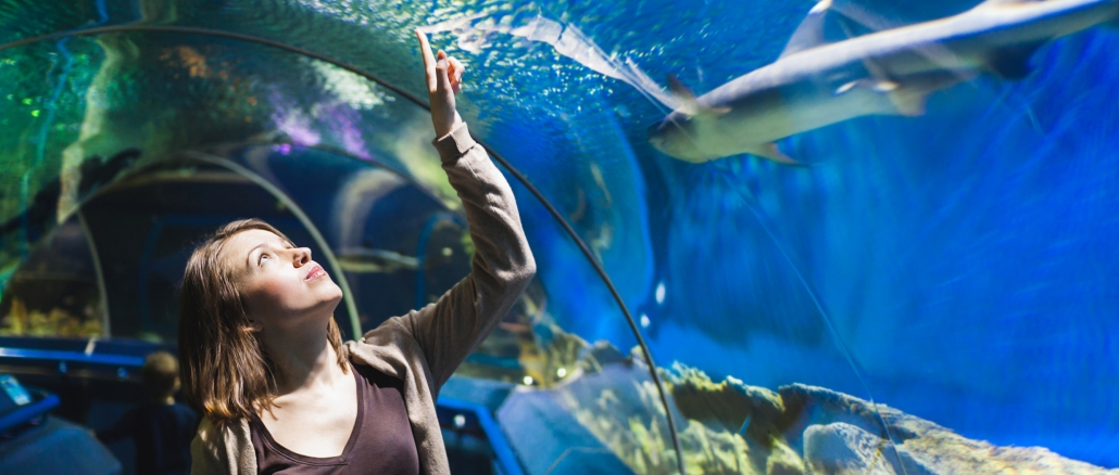 Kelly Tarlton?s Sea Life Aquarium