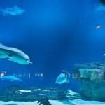 alexandria-aquarium