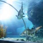 bangkok-aquarium