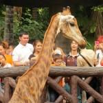 dusit-zoo