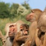koelner-zoo