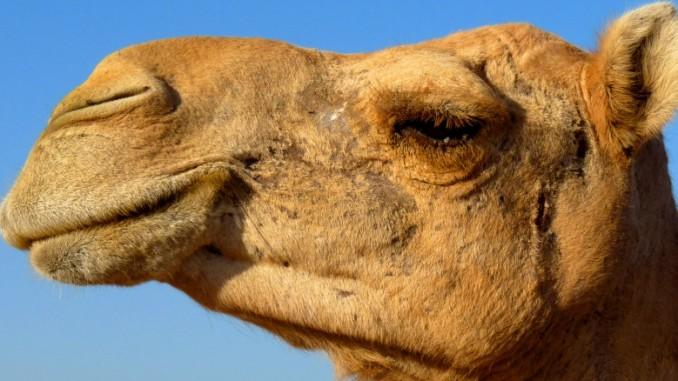 ras-al-khaimah-zoo