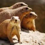 auckland-zoo