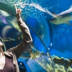 kelly-tarltons-sea-life-aquarium